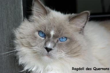gribouille-yeux-bleus