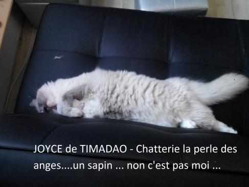 joyce-et-le-sapin-1