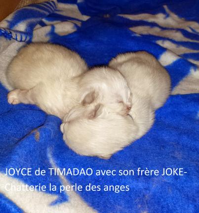 joyce13