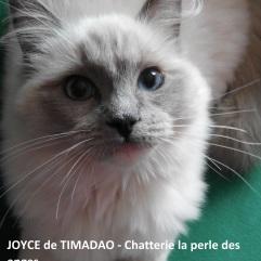 joyce3