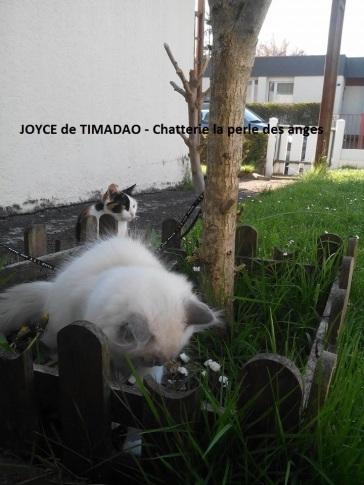 joyce4