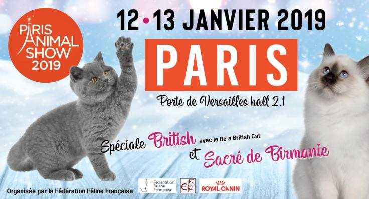 association francaise ragdoll fife loof expo feline versailles animal show chatterie la perle des anges chatons normandie calvados