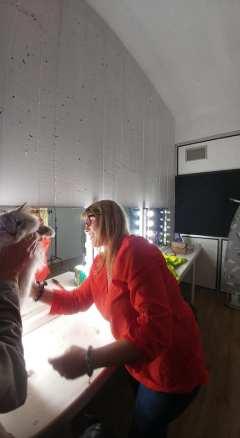 casting shooting photo chaton chat ragdoll chatterie la perle des anges ragdoll normandie caen calvados 15