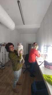 casting shooting photo chaton chat ragdoll chatterie la perle des anges ragdoll normandie caen calvados 19