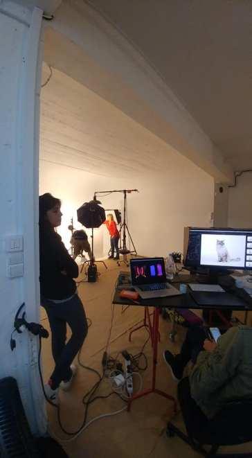 casting shooting photo chaton chat ragdoll chatterie la perle des anges ragdoll normandie caen calvados 9